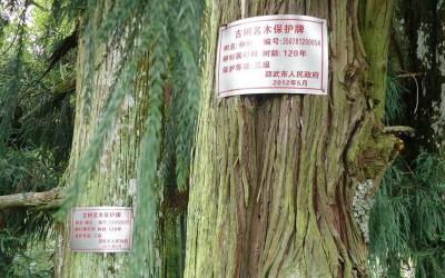 山东实行古树名木三级保护制度