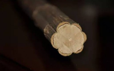 世间最朴素的六道木,却有最珍贵的价值