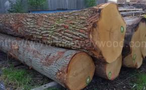 德国进口 白橡原木 原木木料 橡木家具刨切级 A级