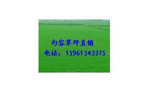 农户直销天堂草坪,百慕大草坪,狗牙根电15961543375