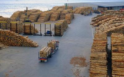 中国海关禁止香港熏蒸原木入港