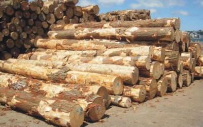 木材行业近期或将面临供应危机,请提前做好准备!