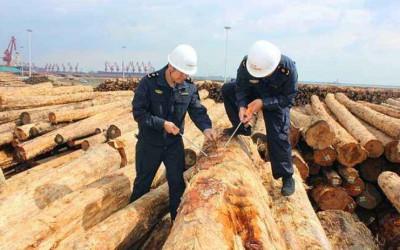 岚山港木材货场开展专项