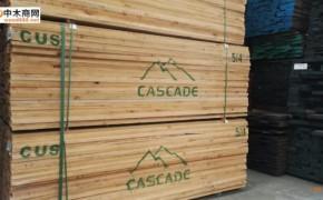 美国赤杨木实木板材批发