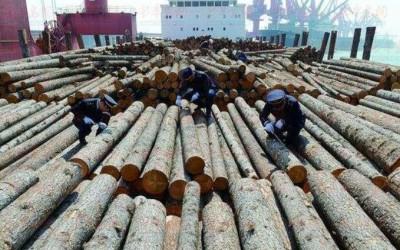 天津东丽加强进口木材检疫工作