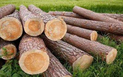 木头真的是越重越好吗?