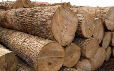 加纳木材主要出口至印度、中国、德国、越南和比利时等地区