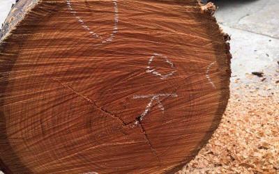 美国樱桃旋切级原木图片