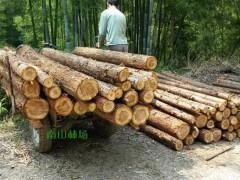 柳州沙塘镇开启木材行业