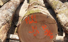 林场直销法国白橡原木