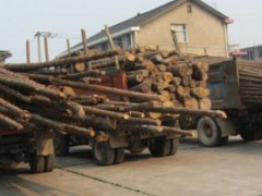 广西柳州查获多辆非法木