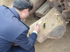 我国从进境木材首次截获长带刺虎天牛