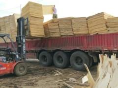 杨木板皮装车视频 (49播放)
