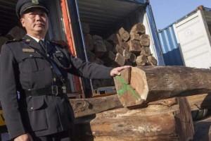 国务院修改木材收购及濒危物种进出口行政法规