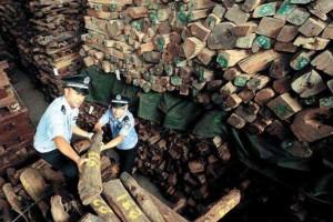 香港海关收缴珍贵红木木