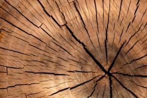 内蒙古五原县对木材加工厂进行检疫督查