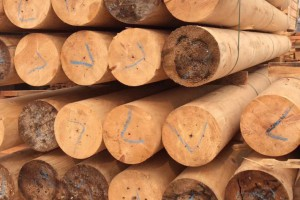 印尼菠萝格_加勒比松_南洋铁杉工程木方_闽港木业