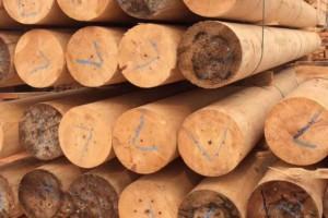 越南有望增加对澳大利亚的木材出口