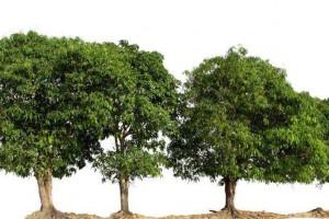 园林树木整形修剪的方法有哪些?