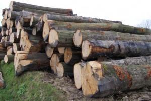 一季度美国阔叶木对东南亚及大中华区的出口额超过6.44亿美元