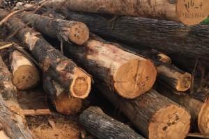 什么叫油柏木?油柏木的优缺点?