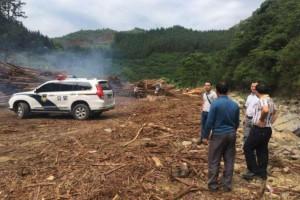 贵州三都县对木材企业进
