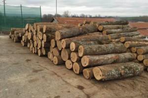 欧洲白橡木原木批发