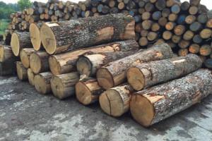 欧洲白橡木原木