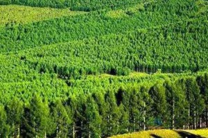 江西九江市林业总产值达397.4亿元