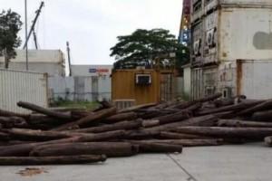 香港非法木材发贩运储存