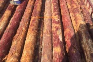 木材需求旺盛 俄罗斯进口班列热度高
