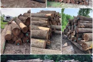 美国黑胡桃原木,刨切级原木林场直供