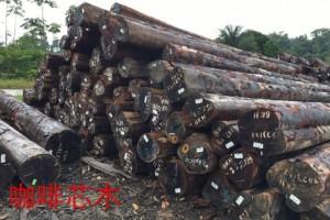 上半年镇江港木材进口达101万吨