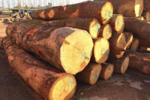 欧洲白橡木原木直供厂家