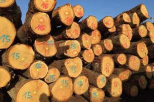 欧洲白橡木原木产品