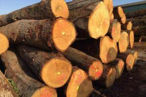 欧洲白橡木原木图片