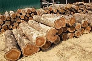 江西德安县开展木材加工