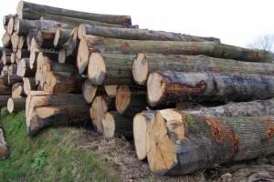 中国木材消耗放缓,6月平均日出港量7.5万立方米
