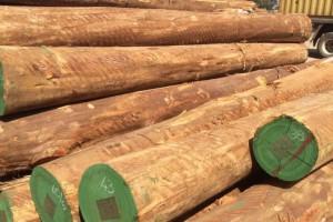 南美《尤加利》玫瑰桉木原木