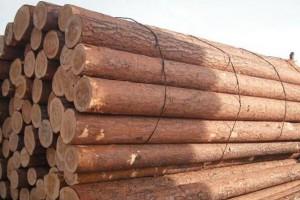 俄罗斯欲提升木材工业价