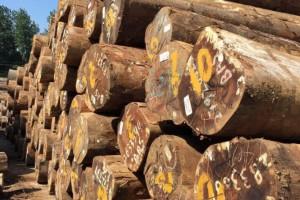塞拉利昂环保集团表示对
