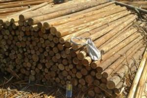 贵阳市开展木材流通领域