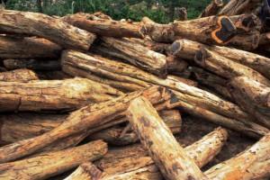 预测到2032年肯尼亚木材