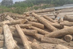 绥芬河打造出口木制品加