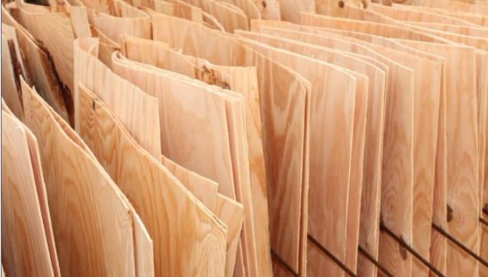 白杨木刨切单板木皮中杨木木皮和杨木单板的主要区别