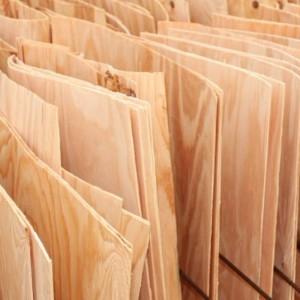 白杨木刨切单板木皮品牌
