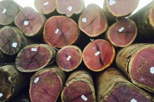 巴西紫心木原木图片