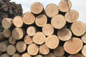 乌拉圭玫瑰桉木直供厂家