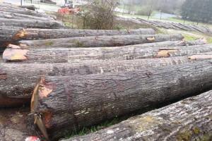 上半年广西浦北县木材加工总产值达13亿元