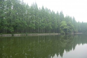 国家储备林基地建设项目